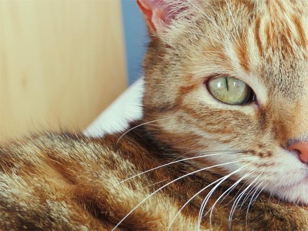 Sleepy cat by gracedavis