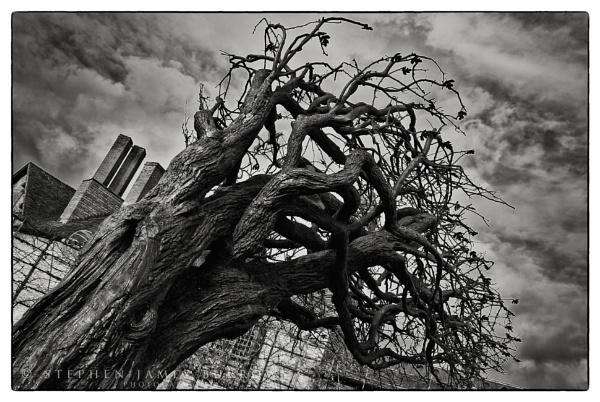 The Hawthorn Tree by Stephen_B