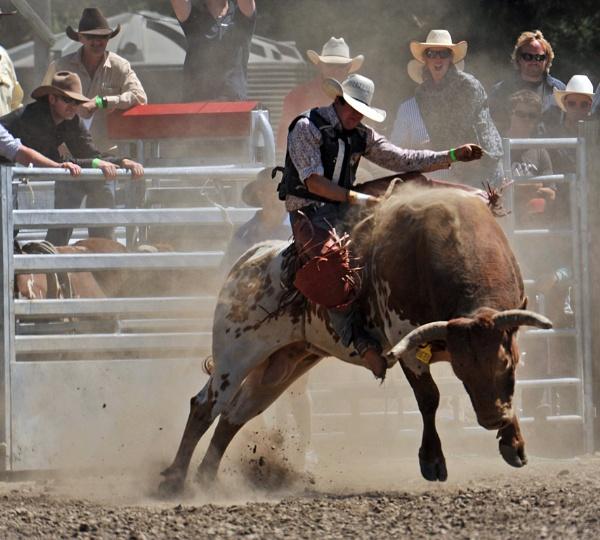 Ride i\'m cowboy by peterthowe
