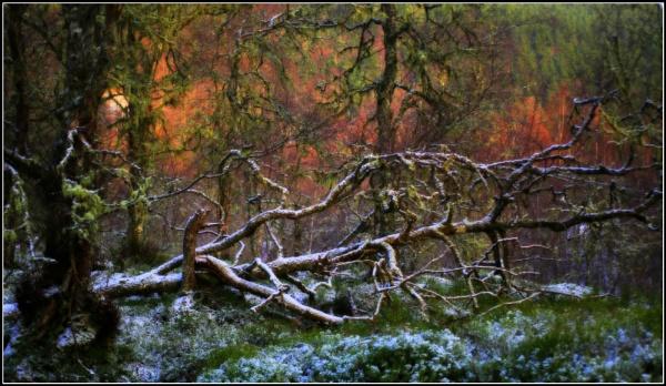 Early snowfall. Glen Affric by ianblanchett