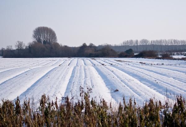 snowy field by alant2
