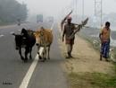Farmer on the highway by debu