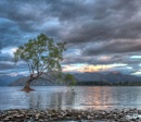 The Wanaka Tree by johnjrp