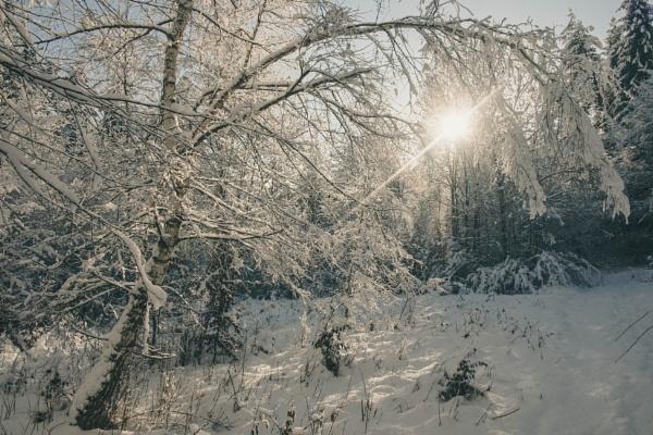 winter beauty by vgallova