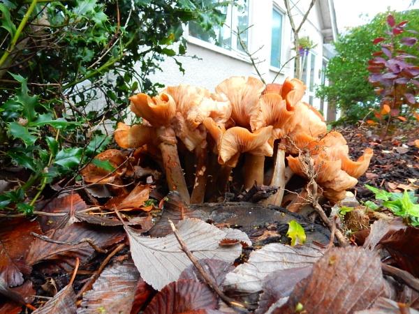 Mushrooms by kenstan