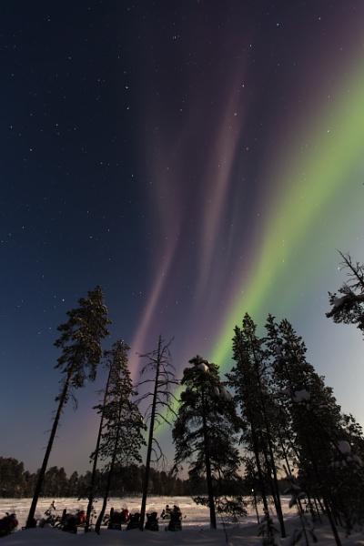 Aurora Safari by Legend147