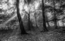 Woodland Light by Legend147