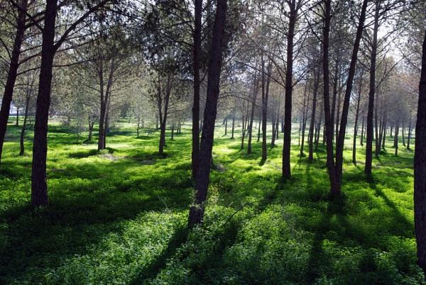 Aglantzia Park