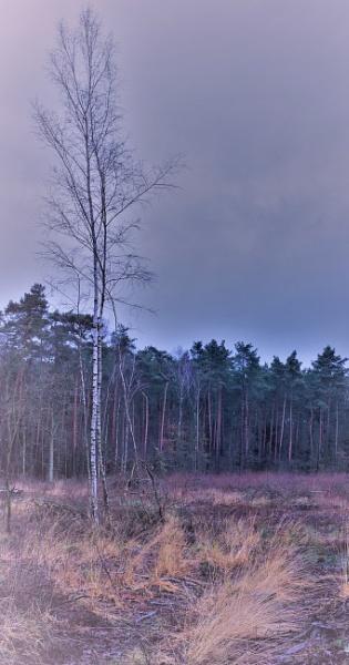 FOREST- Birch Tree & Grasses by PentaxBro