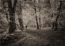 Gannochy Walk