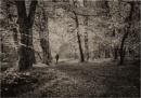 Gannochy Walk by MalcolmM