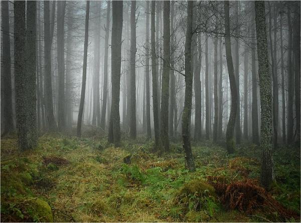Woodland Mist by MalcolmM