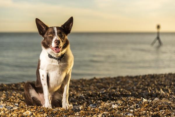 Beach Dog by sitan1