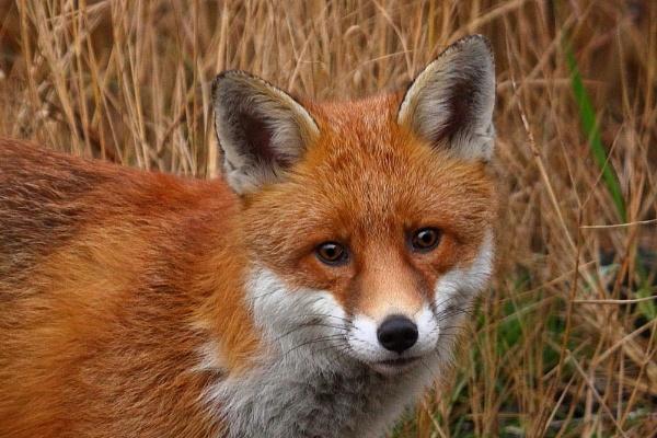 Foxy Lady by TerryMcK