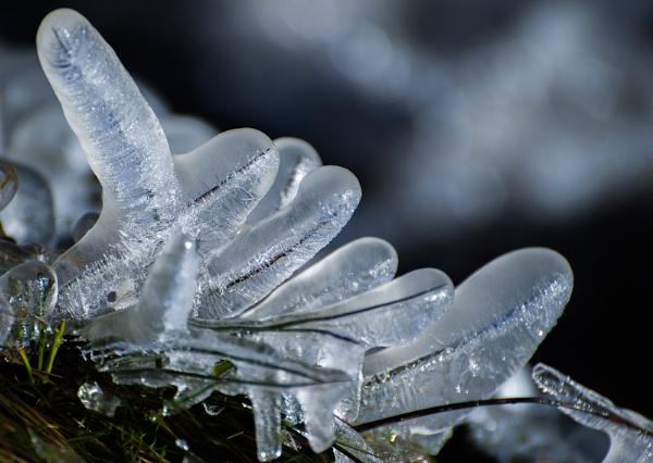 Frozen Fingers by icphoto