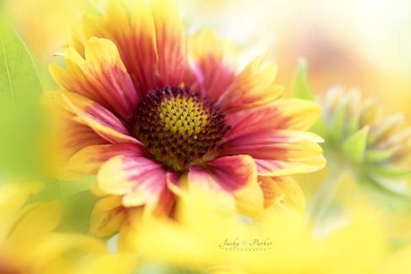 Sunshine by jackyp