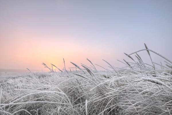 frosty morning by carper123