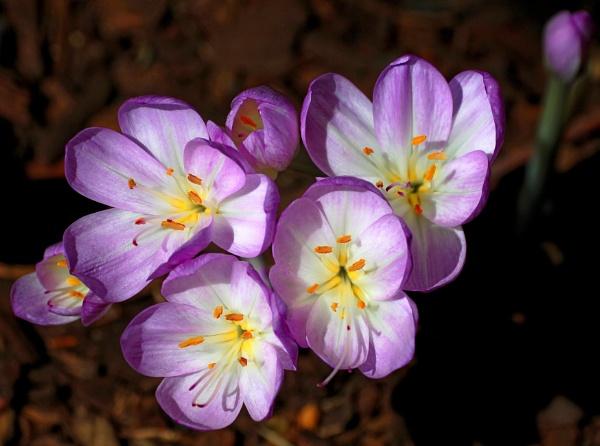 Purple  Glow by tonyguitar