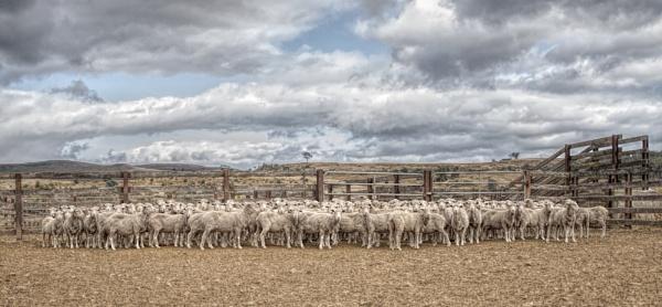 Sheepish by abeeror2