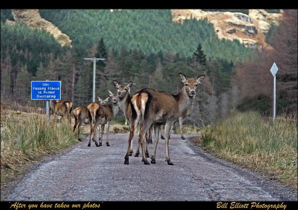 Drive careful through the Glen. by Pixelliott