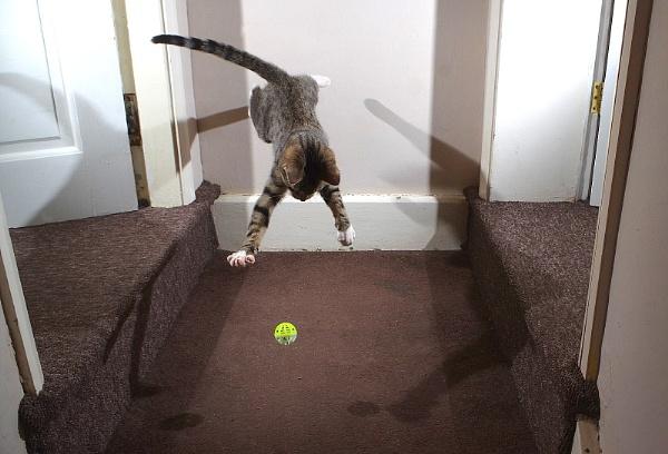 Bouncy cat