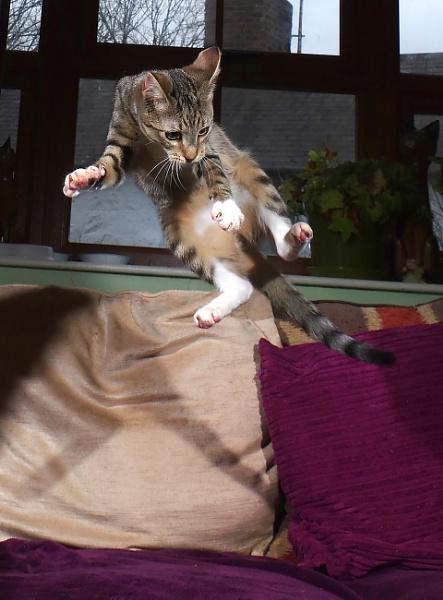 Kung-fu Kitty
