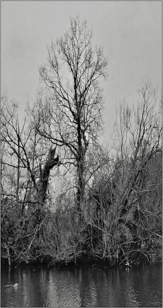 gloom enshrouds by estonian