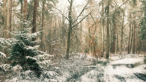 winter way by gerainte1