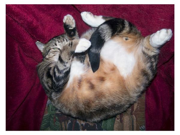 Felidae, Felinae.......cat!