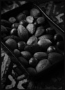 Mixed Nuts by Morpyre