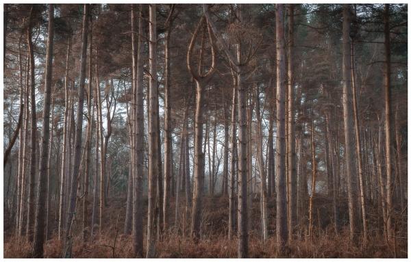 Delamere Forest by Satlight
