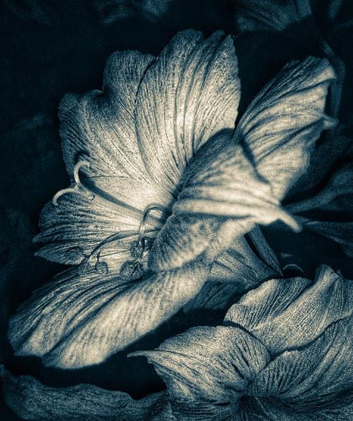 B&W petals