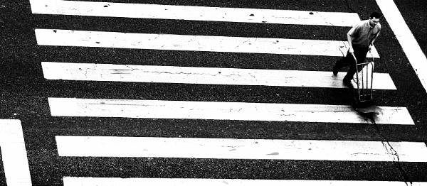 La zebra y el carrito. by femape