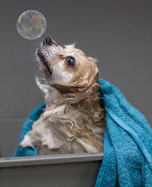 Bath Bubbles by Jcarabine1