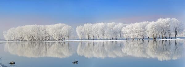 Winter trees reflexion on Danube river by jordachelr