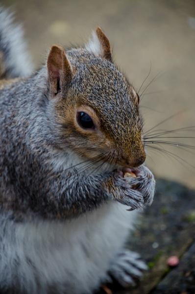 I love nuts..... nom nom nom by Craigie10