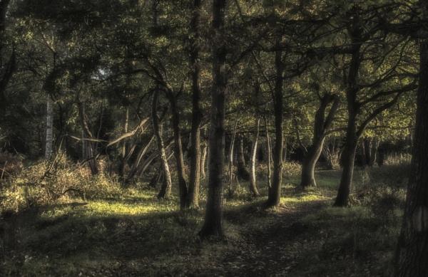 In the dark wood by dawnstorr