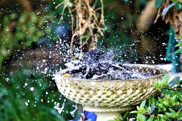 Splash! Splash!!