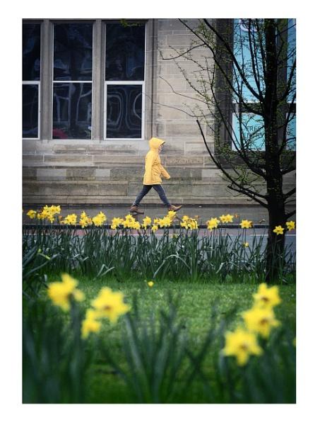 Yellow ... by woodlark