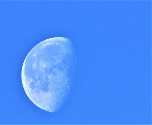 Blue Moon by markjnorris