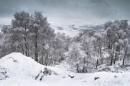 Winter Bloom by Trevhas