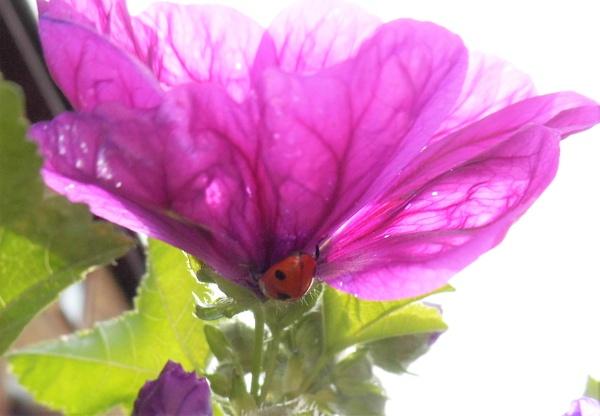 hiding ladybird by jenny007