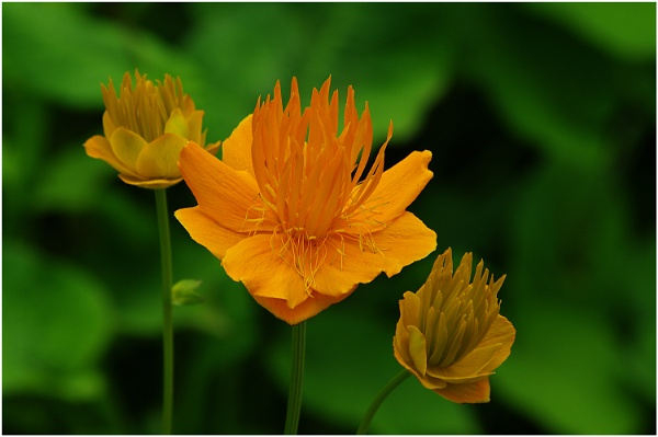 Orange on Green by johnriley1uk