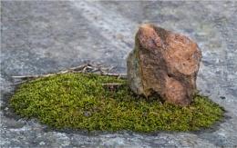 Still Life :  Moss and Rock