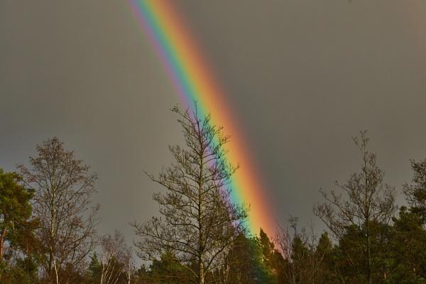 RHS Wisley  Rainbow by JJGEE