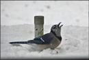 *** Enjoying the Snow *** by Spkr51