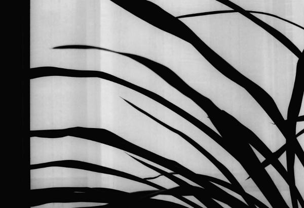 window plant by leo_nid
