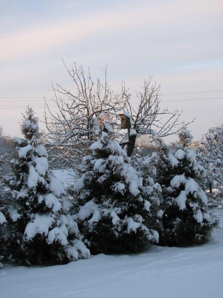Winter morning by Algimantas