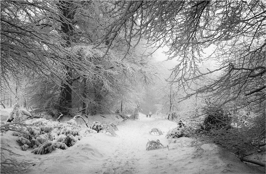 Winter Dog-walking