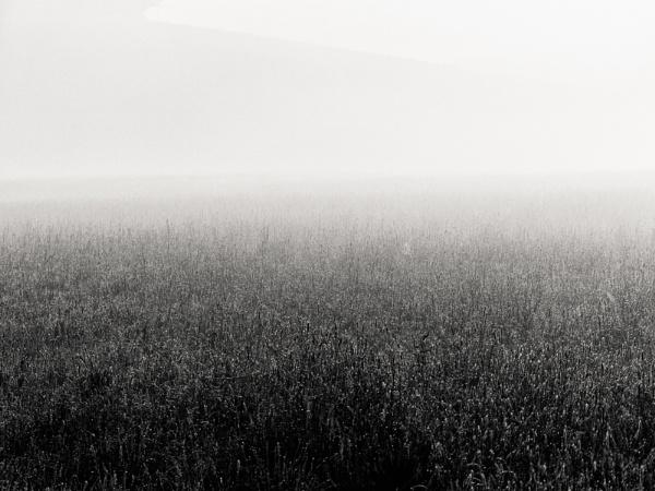 Field by mlseawell